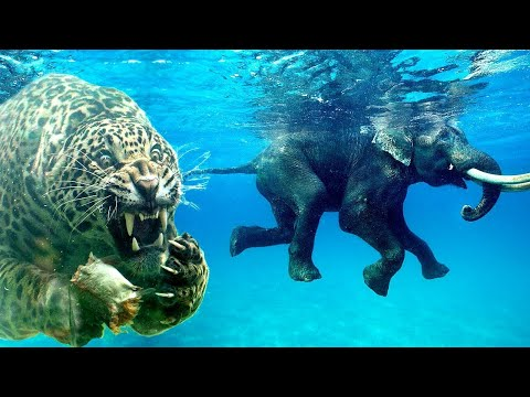 Animals You Didn't Know Could Swim!