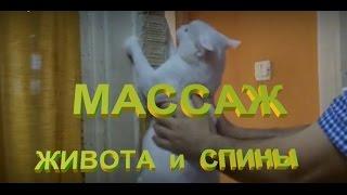 здоровые кошки: массаж спины и живота + лечение от запора