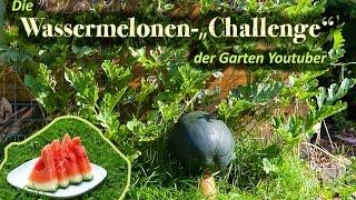 Wassermelonen säen und auspflanzen | dergartenkanal Wassermelonen Challenge #1