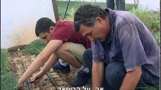 הבלוף של עבודה ישראלית בחקלאות