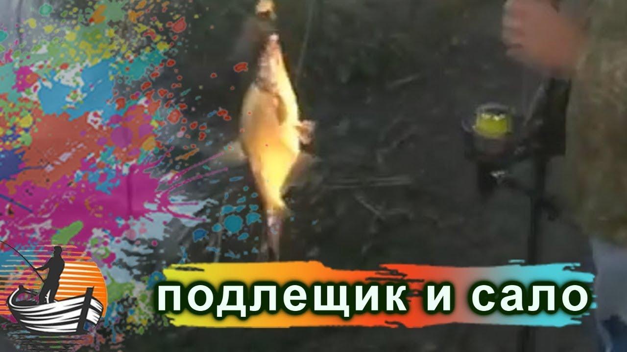 Подлещик и лещ очень любят сало  / Рыбалка- это жизнь