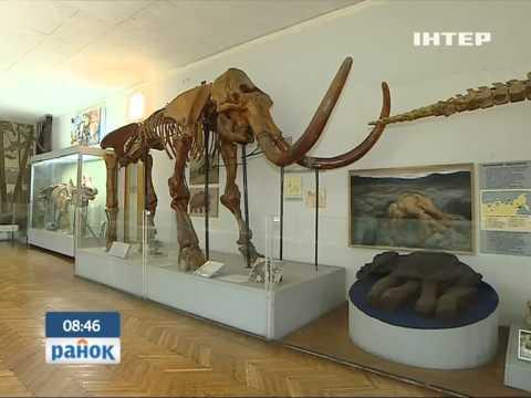 Киевский музей палеонтологии - ископаемая история планеты