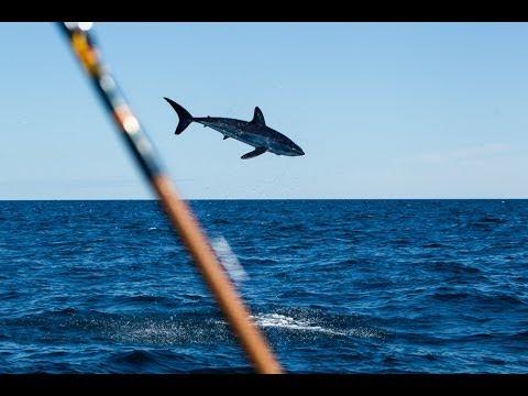 mako shark jumping near boat