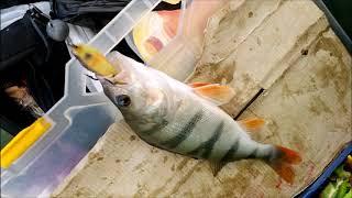 Рыбалка состоялась