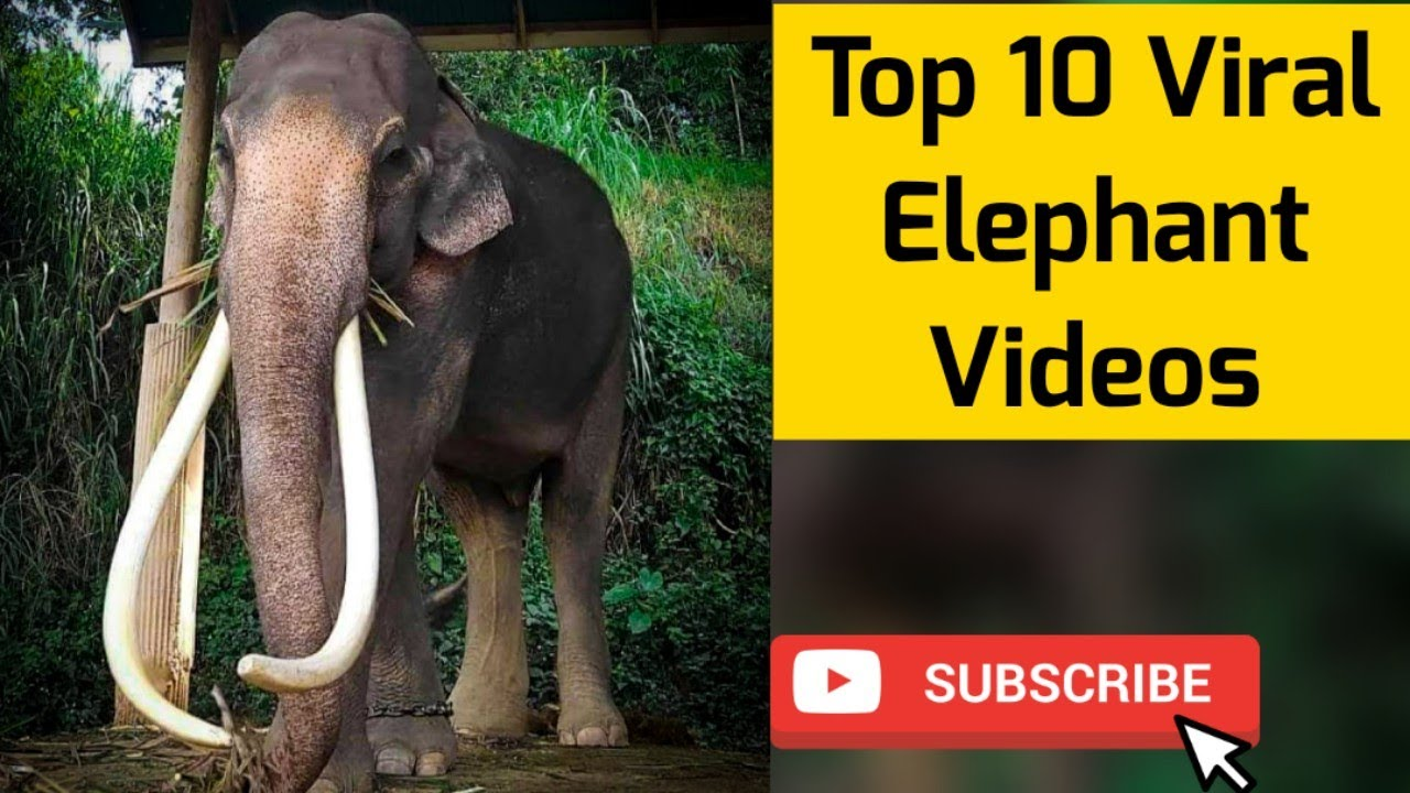 Elephant Videos | latest Animal viral Video compilation 😍