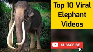 Elephant Viral Video compilation | latest Animal Video compilation 😂😍 | E4 Elephant