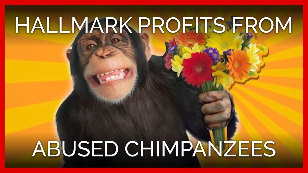 Help Save Chimpanzees from Missouri Primate Foundation
