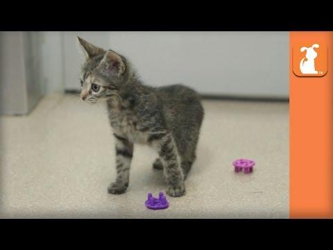 Scaredy Cat Kitten - Kitten Love