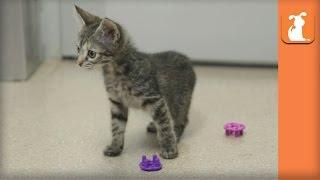 Scaredy Cat Kitten  Kitten Love