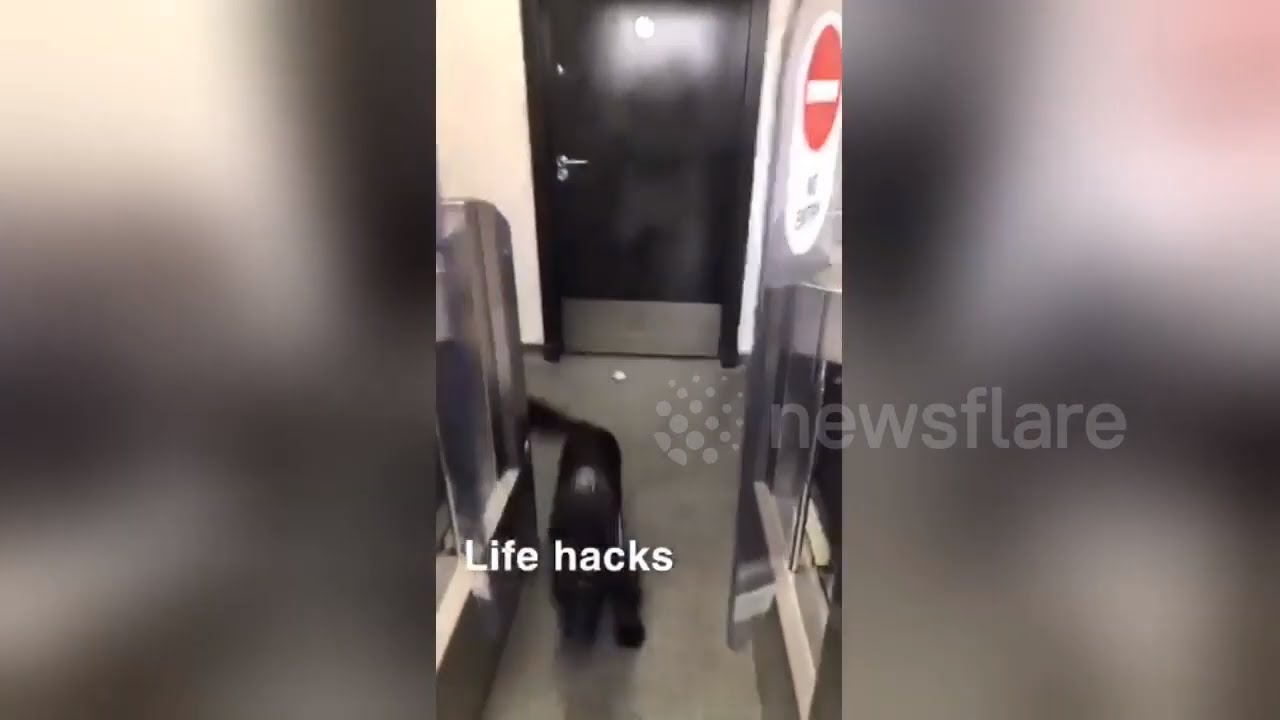 Woman Desperate for Toilet uses Dog to Get In Public ...