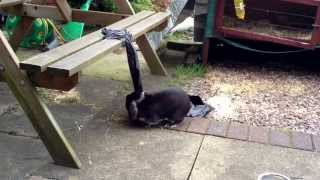 Cute Sooty Bunny Rabbit Playing Out