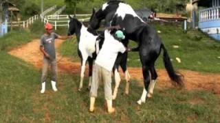 Cruza de Cavalo Pampa - Demolidor do Nilo X Festa da Agua Formosa