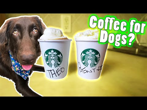 Pumpkin Spice Latte for DOGS! Easy DIY Recipe For Your Dog 🎃☕