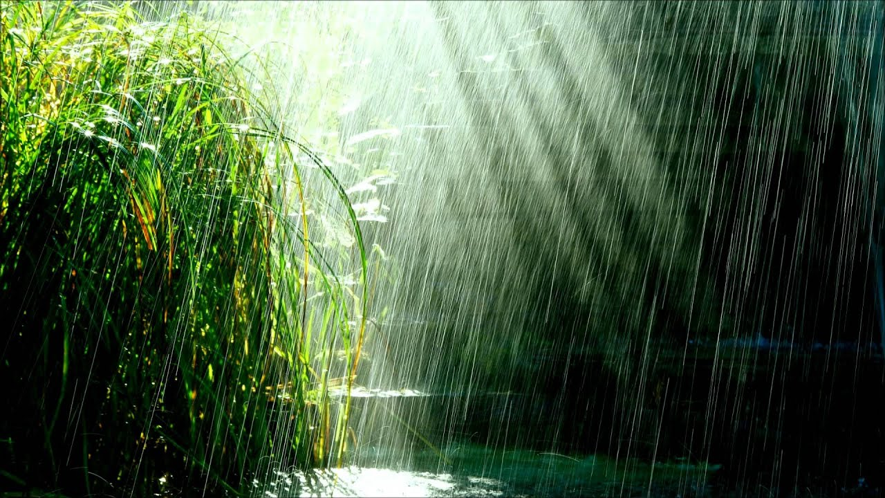 Image result for tropical rain storm