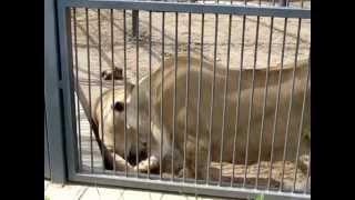 приколы любовь животных онлайн