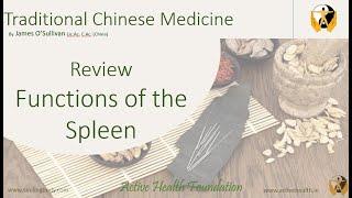 TCM Functions of the Spleen (Pi)