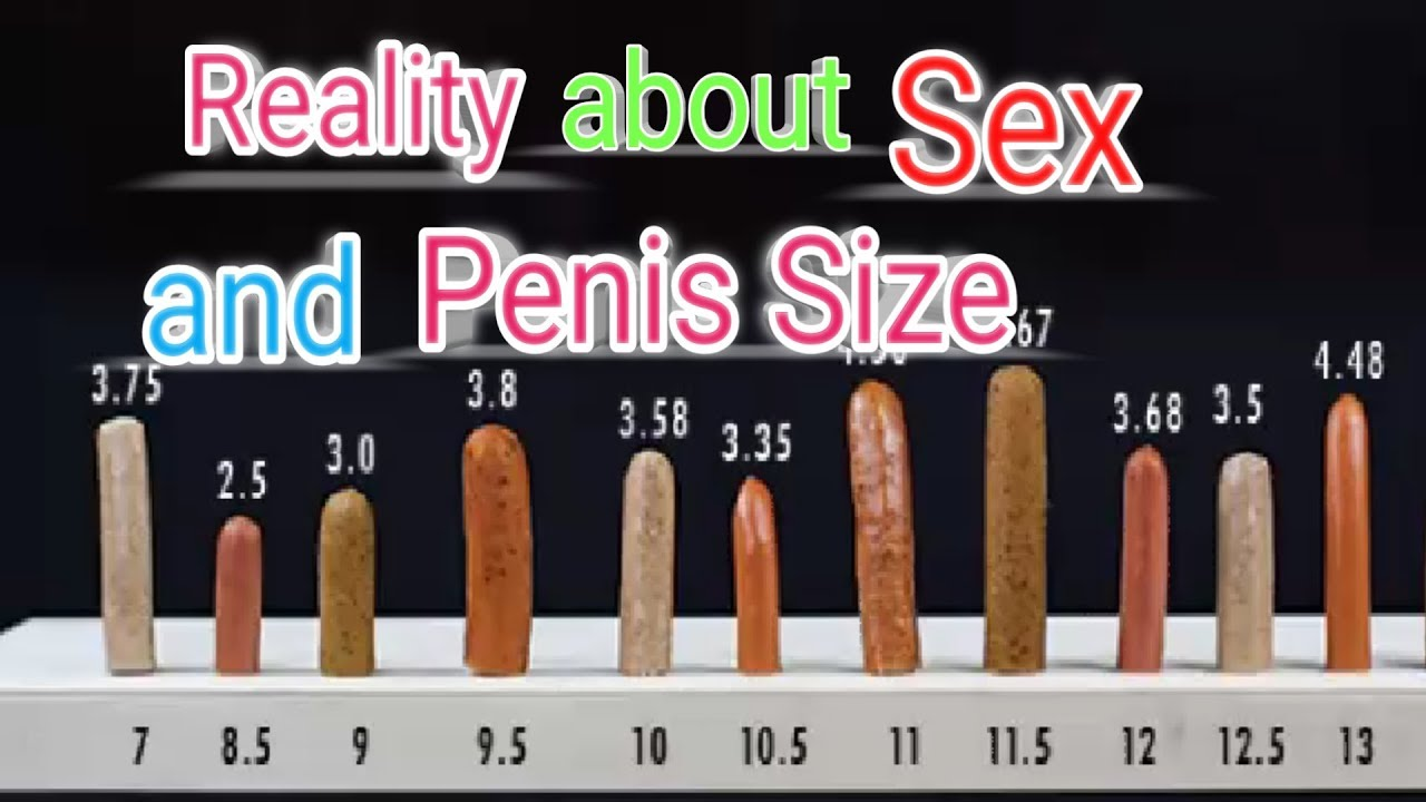 Average penis size