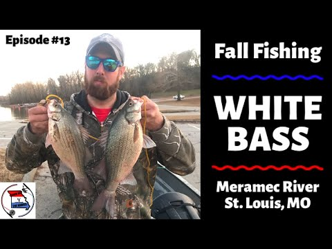 White Bass Fishing On The Meramec River, St. Louis, MO | How To Catch White Bass In The Fall