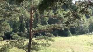 Участок в Карелии(, 2013-02-06T10:49:56.000Z)