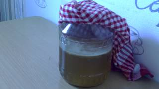 видео ???? Как вырастить чайный гриб (Kombucha) Скорая помощь ч2