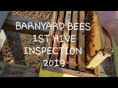 Barnyard bees first hive inspection  What you should be looking for