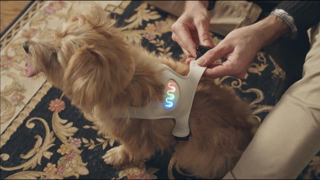 Resultado de imagen para sensor para perros animo