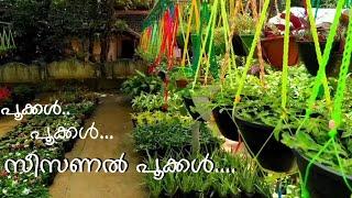 Mannuthy Madakkathara flowers \u0026 fruits nursery -  - Morning Star Nursery Trending Seasonal Flowers