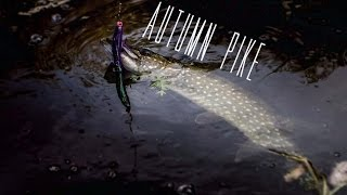 Autumn Pikes - Fly & Spin