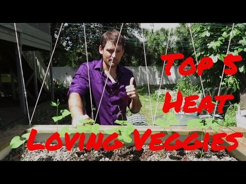 Top 5 Florida Heat Loving Veggies
