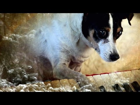 Documentary: Heart of a Dog