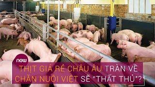 Thịt giá rẻ châu Âu tràn về, ngành chăn nuôi Việt sẽ