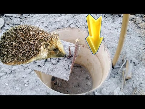 Wonderful Innovation For Hunting Hedgehog With Paint Bucket