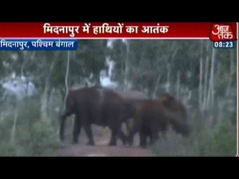 Elephants Destroy Crops In West Bengal