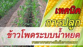 รวยทางลัดกับการเกษตร | การปลูกข้าวโพดระบบน้ำหยด  | เกษตรแม็กซาโก้ (3/3)
