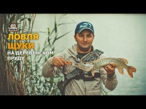 видео как ловить щуку на прудах