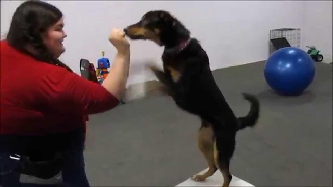 Parkour Dog Training Videos