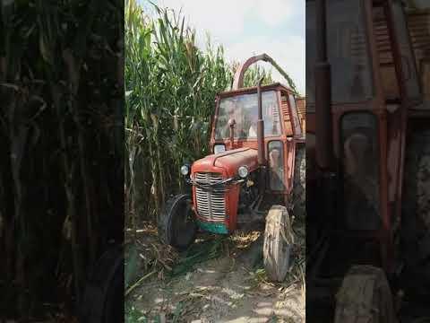 Siliranje Kukuruza I Mucenje Traktora.
