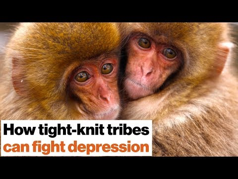 Loneliness Kills: How To Fight Depression With Social Support   Johann Hari