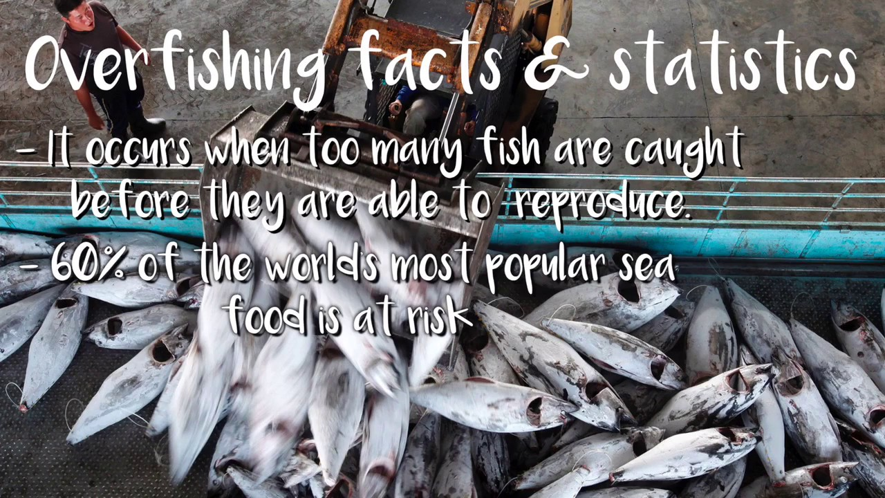 over fishing The definition of overfishing is when there is so much fishing that a population of fish is in jeopardy of not being able to sustain themselves within a certain area.