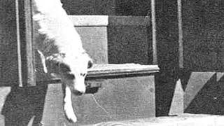 Was vor 66 Jahren aus dem Zug geklettert kommt, veränd...