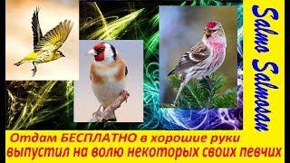 Отдам БЕСПЛАТНО в хорошие руки - выпустил на волю некоторых своих певчих птиц
