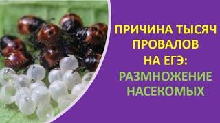 9. Причина тысяч провалов на ЕГЭ: размножение насекомых.