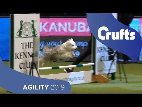 Agility Championship Round 2 – Agility - Small | Crufts 2019