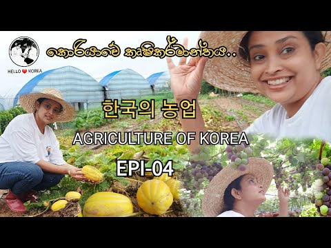 Agriculture of Korea ~ Hello Korea Epi- 04~ 한국의 농업~ කොරියාවේ
