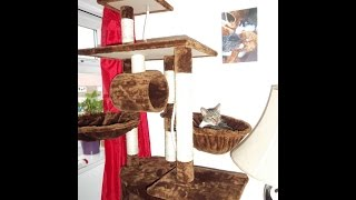 How To Assemble Foxhunter Cat Tree Activity Centre