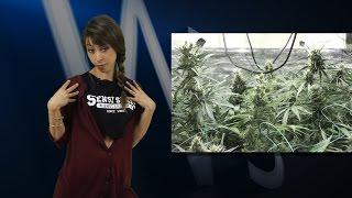 Marihuana Television News 29 - Debate en el SENADO