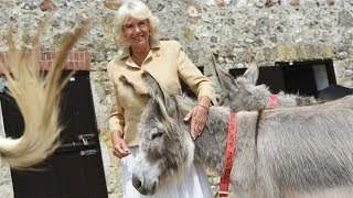 HRH The Duchess of Cornwall visits The Donkey Sanctuary