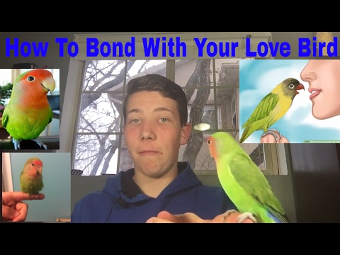 How To Bond With Your Love Bird