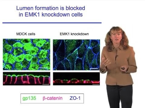 Susan McConnell (Stanford): Designing effective scientific presentations