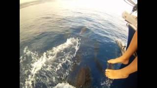 Tenerife Whales & Dolphins. Como to Paradise!